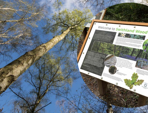 Interpretation Panels for Swithland Wood